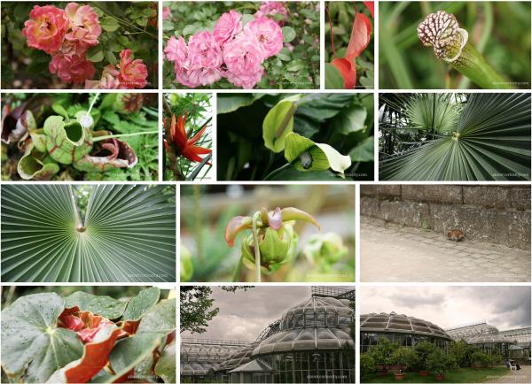 flickr, botanical garden