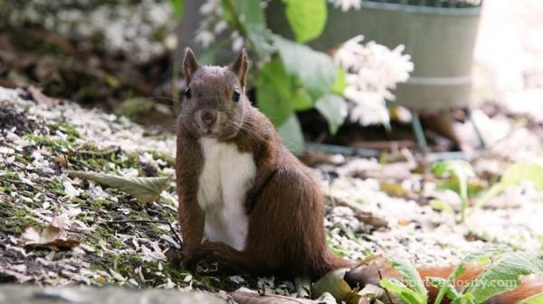 squirrel at botanical garden berlin