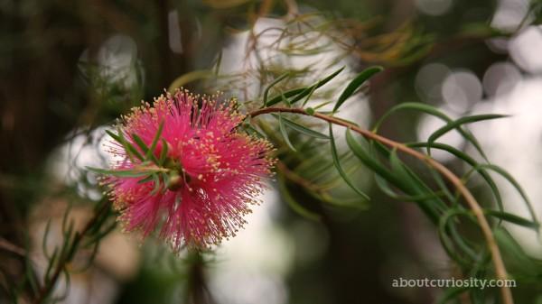 exotic pink flower at botanical garden berlin