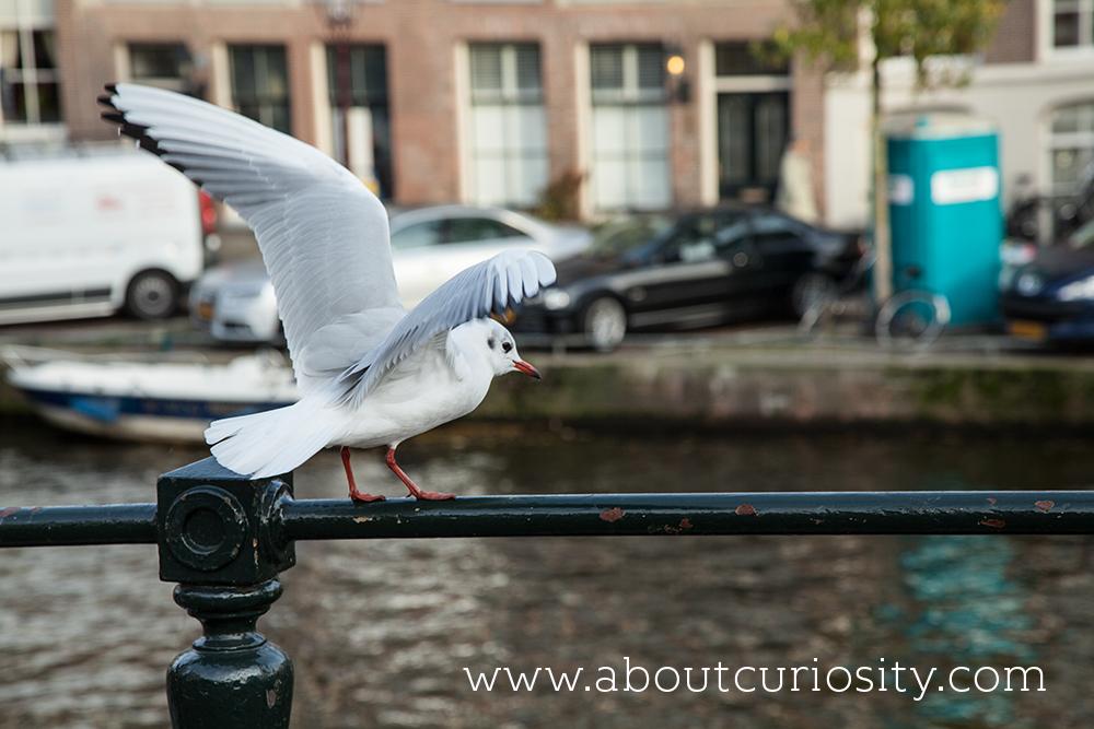 amsterdam_2-112
